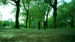Tree lined path through park Stock Footage