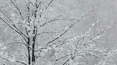 Heavy snowfall on the background of snowy trees Stock Footage