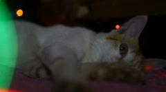 Sleepy mood of Cat Stock Footage