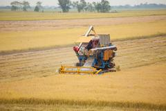 farm worker harvesting rice with combine machine - stock photo