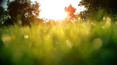 sunset through blades of grass - stock footage