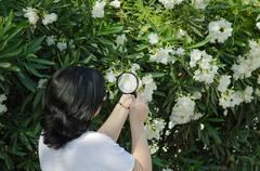 Stock Photo of botanist watching the oleander flowers on the tree