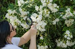 Stock Photo of naturalist watching the white oleander flowers