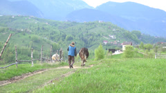 Stock Video Footage of Peasant with cows walking on village road, beautiful spring mountains zoom in 4K