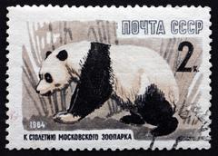 Postage stamp Russia 1964 Giant Panda, Animal - stock photo