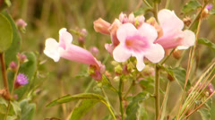 Pink flower Stock Footage