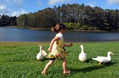 Little girl chasing wild duck Stock Photos