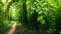 Footpath in the forest. Birdsong. - stock footage