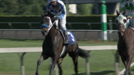 Stock Video Footage of Horse Race, Racing, Run, Track, Wager, 4K, UHD