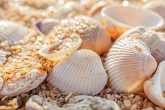 Shell molluscs - stock photo