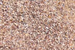 debris shells - stock photo
