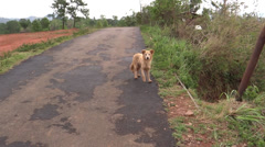 A Playful street Dog on a lone road Stock Footage