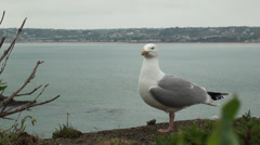 Sea Gull Standing on Jersey Shore Stock Footage