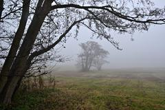 Awl trees in the fog. Stock Photos