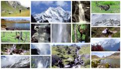 Alps montage. Landscapes, animals and people into the wild. Stock Footage