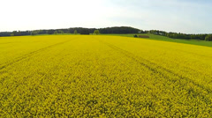 Stock Video Footage of yellow rape field