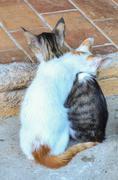 stray cats resting - stock photo