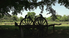 098 Pantanal, Hyacinth Macaws (Anodorhynchus hyacinthinus) on landmachine wheel Stock Footage