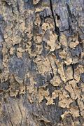 texture of dead wood - stock photo