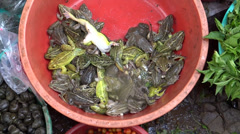 Fresh & live frogs to sell in the market, Imphal, Manipur Stock Footage