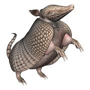 Armadillo Stock Illustration