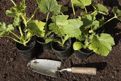 planting seeds in soil - stock photo