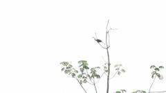 099 Pantanal, Anhinga in tree flies away, slowmotion Stock Footage