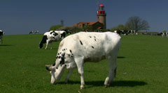 Cows in front of old lighthouse - Baltic Sea, Northern Germany Stock Footage