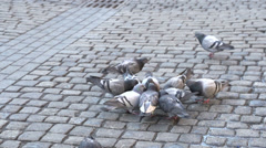 Pigeons eating on brick street slow motion Stock Footage