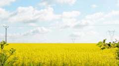 Field of rape plants with high voltage Stock Footage