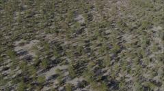 Africa Savanna Trees Stock Footage