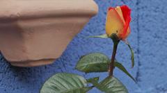 Rosebud (Louis de Funes) Stock Footage