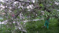 Girl walk through the blossoming apple tree crown Stock Footage