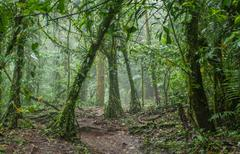 Eerie Jungle in a Rainforest - stock photo
