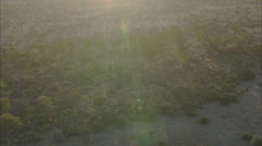 African Wild Deer Savanna Stock Footage