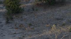 Africa Savanna Trees Wild Deer Stock Footage