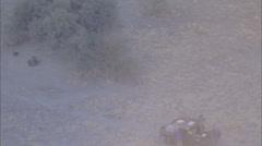 Savanna Wild Dogs Jeep Stock Footage