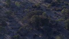 Savanna Wild Dogs Carcass Stock Footage