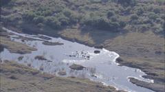 Hippopotamus Savanna Africa River Stock Footage