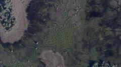 Savanna Trees Africa Stock Footage