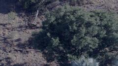 Savanna Africa Safari Wild Dogs Stock Footage