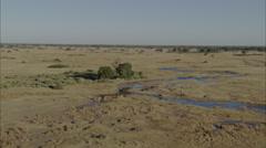 Hippopotamus Savanna Africa Stock Footage