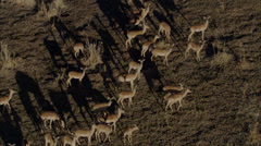 Wild Deer Africa Savanna Stock Footage