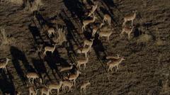 Wild Deer Africa Savanna Arkistovideo