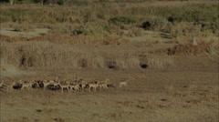 Wild Deer Africa Savanna Stock Footage