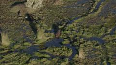 Hippopotamus Crocodiles Africa Savanna Stock Footage