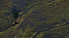 Hippopotamus Africa Savanna Stock Footage