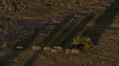 Africa Savanna Elephants Migrating Stock Footage