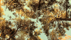 Crown of high green trees against the blue sky Stock Footage