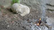 Stock Video Footage of dog curling up next to fire tracking